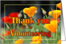 Thank You Volunteer Poppies card