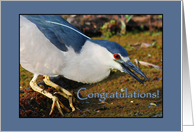 Congratulations from the Flock card