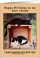 Best Friend Happy Birthday Cats on Crate card