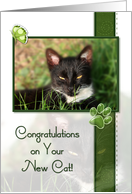 Cat Congratulations On Your New Cat card