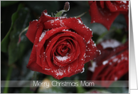 Merry Christmas Mom, Red rose in snow card