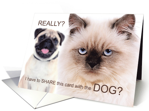 Funny Birthday from the Pets Mad Cat and Dog card (1482538)