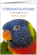 Rainbow Lorikeet Adoption Congratulations card