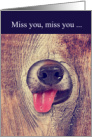 Miss You Funny Dog Lover Kisses card