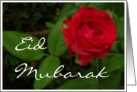 'Red Rose' Eid Card