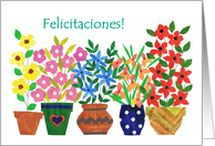 Spanish Greeting Congratulations Card - 'Flower Power' card