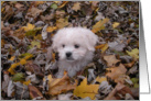 Blank Card - Fall Puppy card