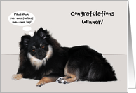 Congratulations, dog show, general, Sable Pomeranian with talk bubble card