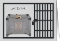 Jail Break, A cute raccoon looking out from his playpen behind bars card