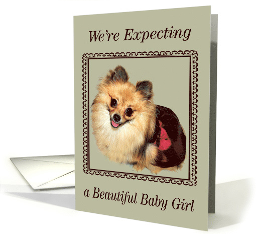 Announcements, We're Expecting A Girl, Pomeranian smiling... (649283)