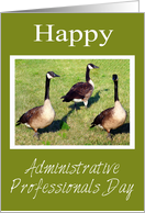 Administrative Professionals Day From The Flock, geese card