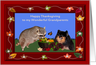 Thanksgiving to Grandparents, Raccoon and Pomeranian with basket card
