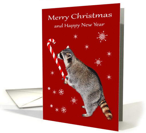 Christmas, general, Raccoon eating a big red and white candy cane card