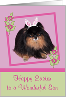 Easter to Son, Pomeranian with bunny ears, butterfly, flower, lilac card