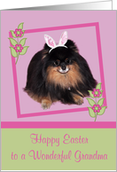 Easter to Grandma, Pomeranian with bunny ears, butterfly, flower card
