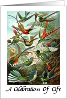 A Celebration Of Life Hummingbirds Funeral Service card