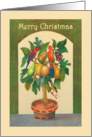 Merry Christmas,Parrot in a pear tree, parrots, fruit, honeyeater. card