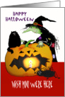 Happy Halloween, Wish You Were Here, Witch with cat, spider, pumpkin card