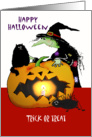 Happy Halloween, Witch with cat, spider, pumpkin,Trick or treat card