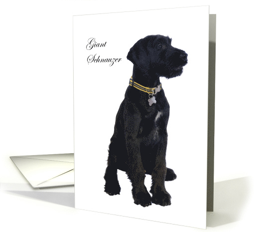 Giant Schnauzer, black dog, blank card. card (1318532)