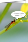 Another Year Older--Don't let it bug you! Dragonfly card