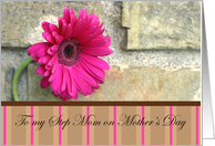 For My Step-Mom On Mother's Day-pink daisy and stripes card