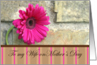 For My Wife On Mother's Day-pink daisy and stripes card