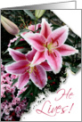 He Lives! Easter Blessings-Pink Lilly card