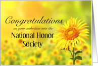Congratulations, Induction into Nation Honor Society, Sunflower card