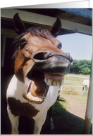 Thanks, Bandera the horse, yawning card