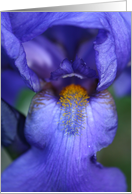 Happy Birthday Iris, iris flower card