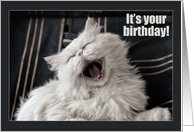 Happy Birthday, laughing Persian cat, humor card