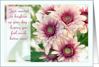 Feel better soon! Pink daisies / chrysanthemums to brighten your day. card