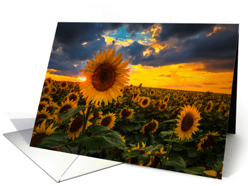 Summertime Sunflowers - All occasion card (1315356)