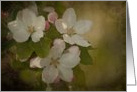 Vintage Blossoms - Apple Blossoms on a textured background blank note card