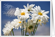 Happy Birthday Daisies - White Daisies against a blue sky card