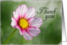 Thank you - Pink Cosmos Flower on a green background card