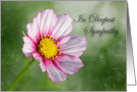 Sympathy- Pink Cosmos Flower on a green background card