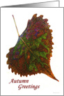 Autumn Greetings - Painted Cottonwood Leaf on White card