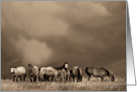 Horses in Sepia - blank note card - all occasion card