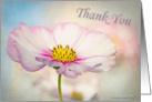 Thank you - Soft Cosmos flower - all occasion card