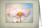 Cosmos Flower - all occasion-blank inside card