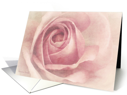 Soft Pink Rose - Blank all occasion note card (760781)