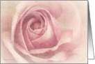 Soft Pink Rose - Blank all occasion note Card
