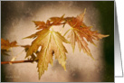 Golden Maple leaves on a brown background - All occasion note card