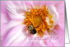 Granddaughter Happy Birthday, Flower and Bee card