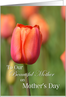 Our Beautiful Mother on Mother's Day, Salmon Tulip card