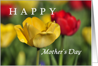Red and yellow tulips, Happy Mother's Day card