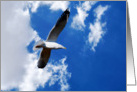 Seagull in blue sky blank note card