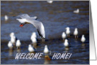 Welcome Home seabird card